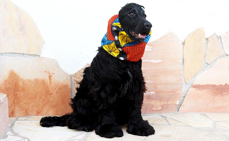 愛犬との日々の暮らしに彩りを